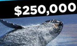 888 Poker предлагает «поохотиться на кита»
